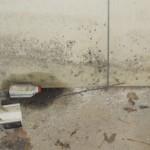 La moisissure retrouvée dans ce garage nécessitera des mesures correctives.