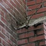 Certains problèmes en disent long comme cette végétation qui pousse jusqu'à l'extérieur de la cheminée.